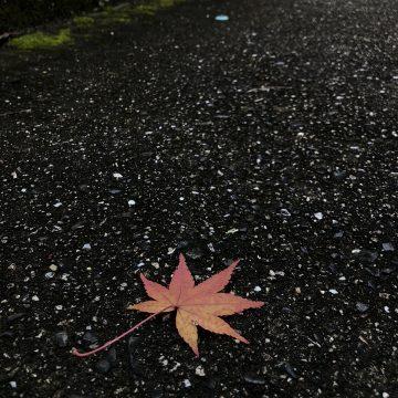 201124来夢来人写真展7